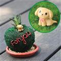 【迎光生技】汪星人多肉心形綠苔-紅貴賓 (4712176825030)