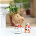 【迎光生技】耶誕麋鹿苔球 (4712176824101)