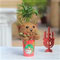 【迎光生技】幸福耶誕麋鹿苔球 (4712176825221)