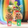 【迎光生技】幸福耶誕老人&麋鹿苔球二入組合 (4712176825245)
