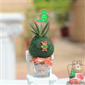 【迎光生技】迷你耶誕多肉綠苔球-小熊 (4712176825252)