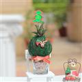 【迎光生技】迷你耶誕多肉綠苔球-麋鹿 (4712176825269)