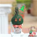 【迎光生技】迷你耶誕多肉綠苔球-薑餅人 (4712176825276)