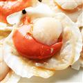 幸福小胖 北海道特級帆立貝1包(500克/5~6顆/包) (SCALLOPS01)