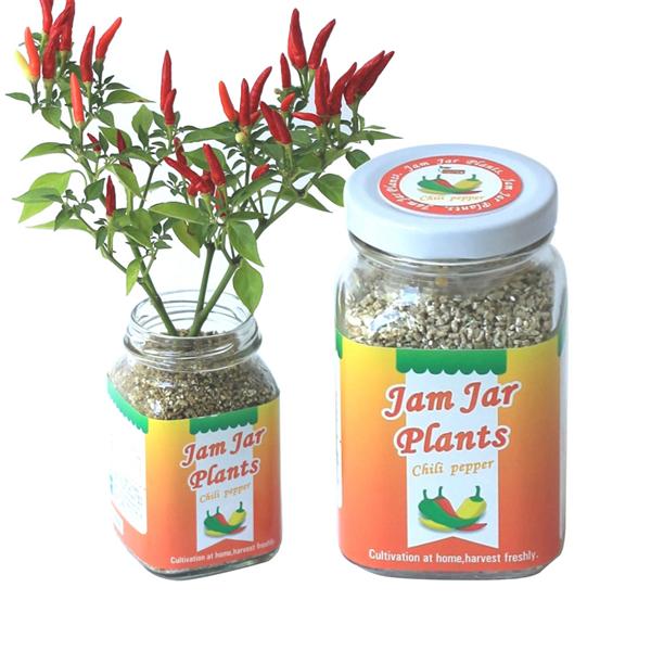 【迎光生技】Jam Jar Plants小植栽-五彩辣椒 (4712176824859)