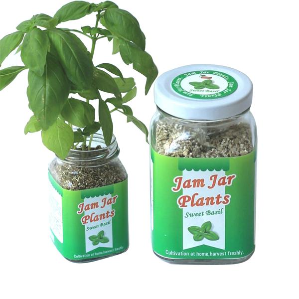 【迎光生技】Jam Jar Plants小植栽-甜羅勒 (4712176824866)